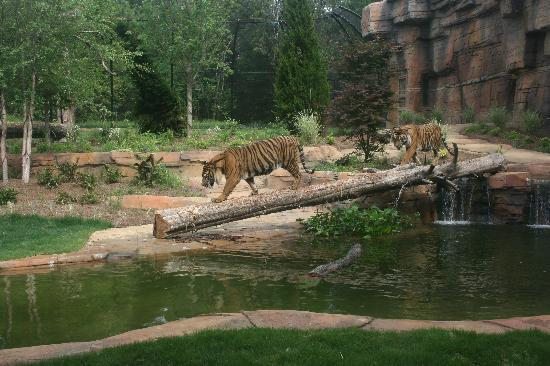 The Jackson Zoo: New Tiger Exhibit