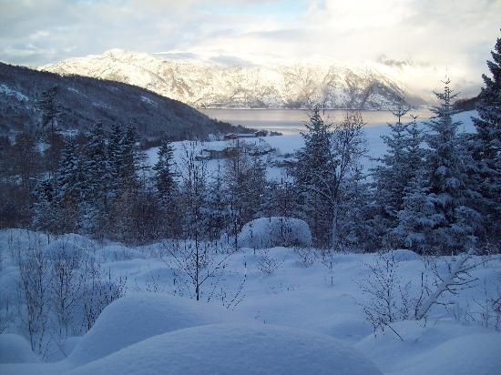 Brekke Cabins: View on trail up behind cabins