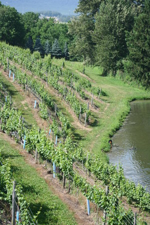Blue Mountain Vineyards: The Vineyard