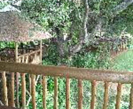 Burchell's Bush Lodge Thumbnail