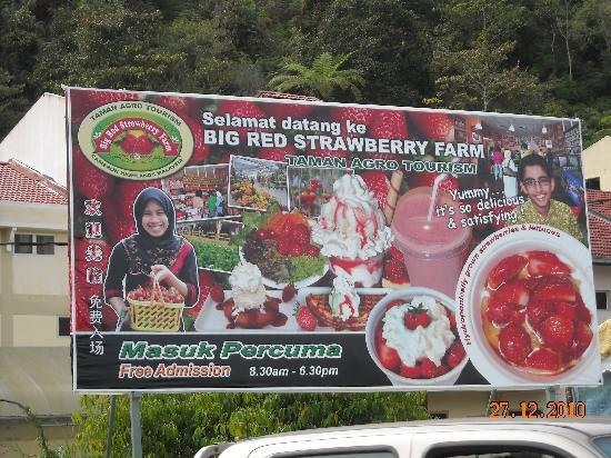 Hotel Rosa Passadena: Within walking distance to the Big Strawberry Farm.