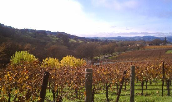 Chic Family Tours: Late fall in Napa