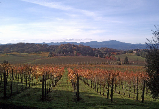 Chic Family Tours: View from second vineyard