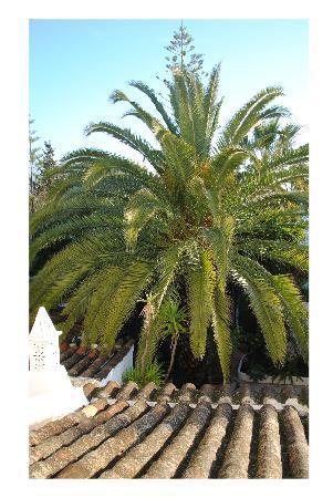 Oasis Verde: Blick aus dem Haus Aloe Richtung Garten