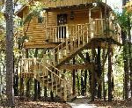 Kitchenette picture of treehouse cottages eureka for Tree house cabins arkansas