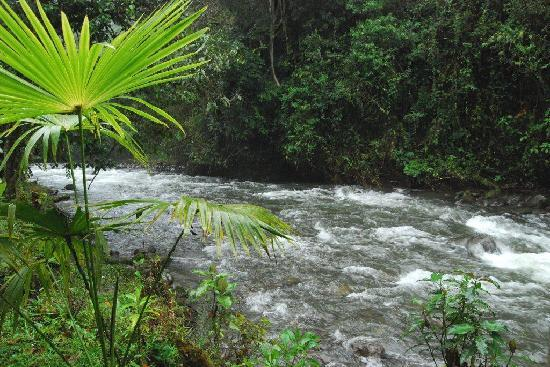 ميندو جاردن لودج: The Mindo River, next to the cabins