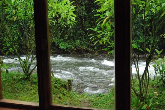 ميندو جاردن لودج: from the cabin, Mindo Ecuador