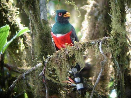 ميندو جاردن لودج: Trogon Mask, Mindo Ecuador