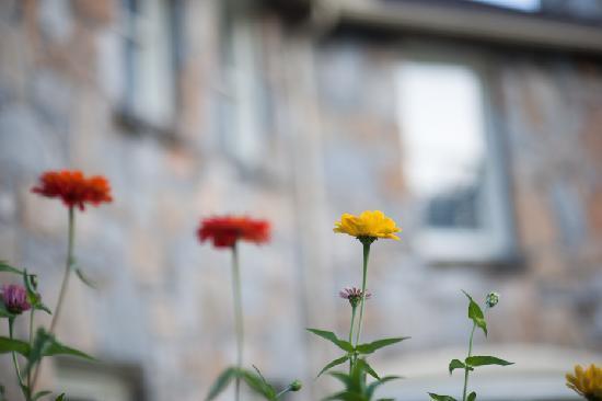 Echo Mountain Inn : Pretty flowers near entrance of hotel