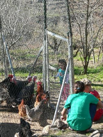 Cortijo Balzain Casas Rurales: Feeding the fowl a big hit with the kids.