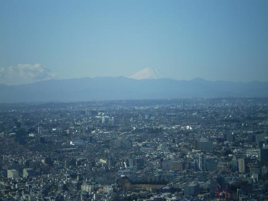 Shinjuku Sumitomo Building: 眺望