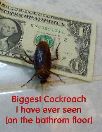 Berjaya Beau Vallon Bay Resort & Casino - Seychelles: Biggest cockroach I have ever seen...