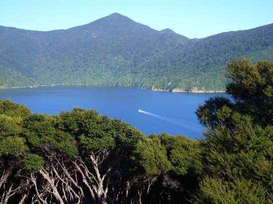 Bay of Many Coves: The view from the top of Motuara Island