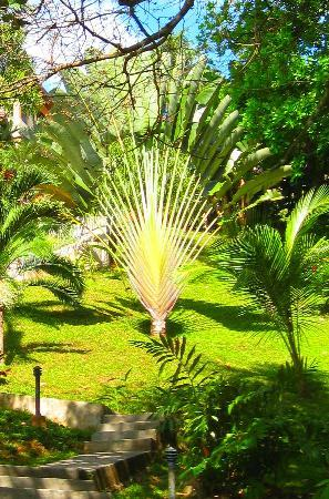 Seagull Cove Resort : travelers palm