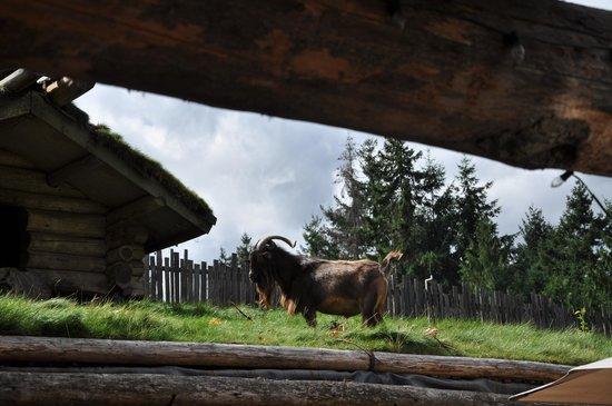 Old Country Market : Wahrzeichen: Ziege auf dem Dach