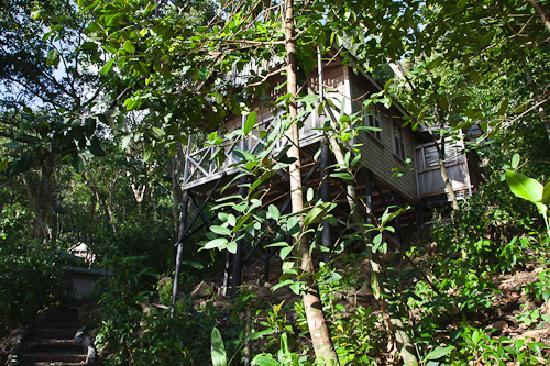 Jungle Bay, Dominica: Cottage