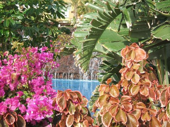 Occidental Jandia Mar : beautiful pool area
