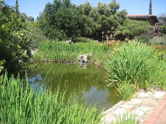 Rancho La Puerta Spa: pond near the dining hall