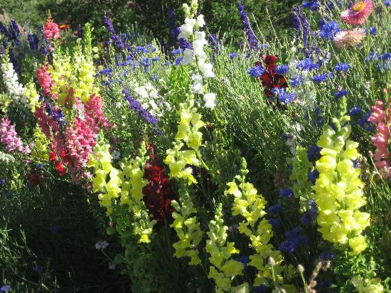 Rancho La Puerta Spa: wildflowers