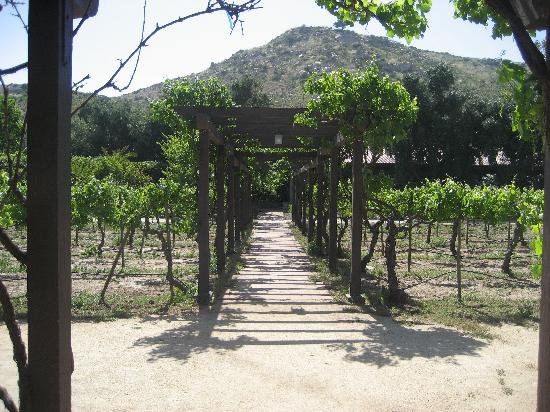 Rancho La Puerta Spa: vineyard in the middle of the grounds