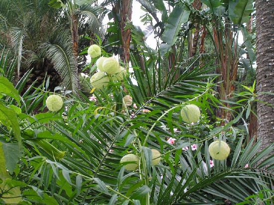 Cadiz, Spain: Tropische Pflanzen im botanischen Garten