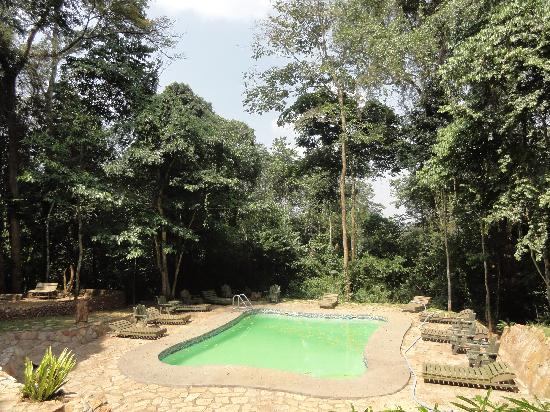 The RainForest Lodge: Swimming pool surrounded by the rainforest