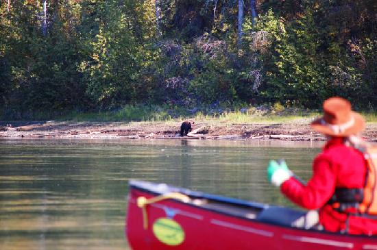 Yukon, Kanada: Bear at river shore