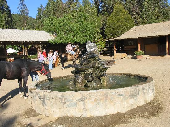 Puro Caballo: Stable area with water