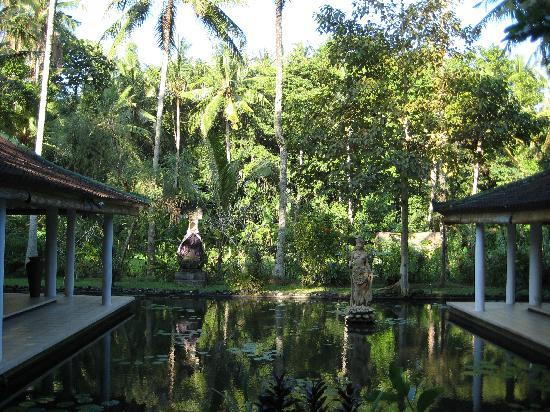 Jiwa Damai Organic Garden & Retreat: houses and pond