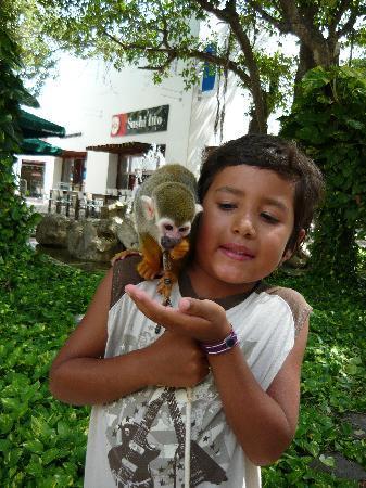 Playacar Palace: just monkeying around