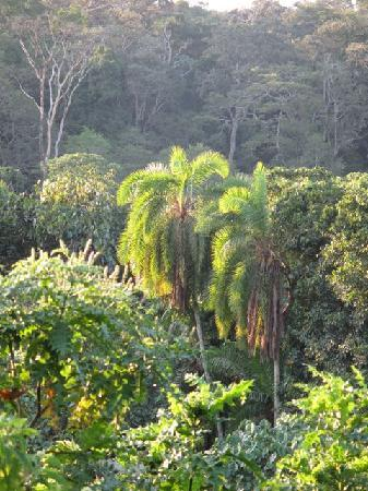 Chimps' Nest: The view of the forest from our cottage