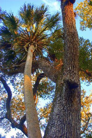 Juniper Prairie Wilderness: Oak and sable
