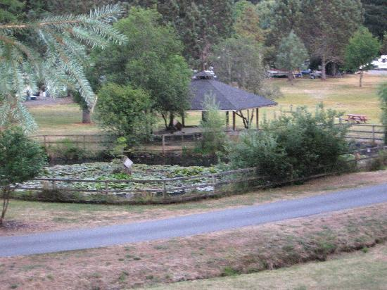 Redwood Meadows RV Resort: View of duck pond with picnic gazebo behind