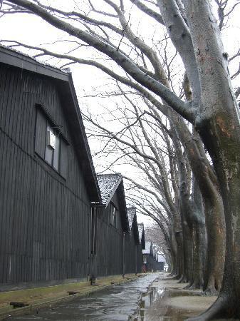 Sakata, Japon : 趣きあるケヤキの並木