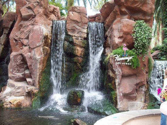 Flamingo Wildlife Habitat : Waterfall