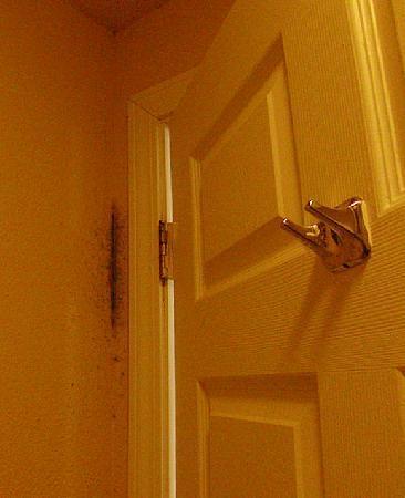 BEST WESTERN Hammond Inn & Suites: Mold behind the bathroom door!