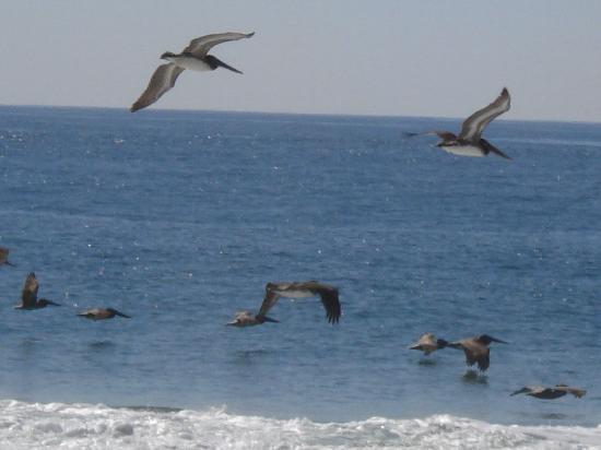 Casa Pan de Miel: Sea gulls