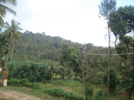 Ashiyana Estate Stay: View from the balcony of the homestay