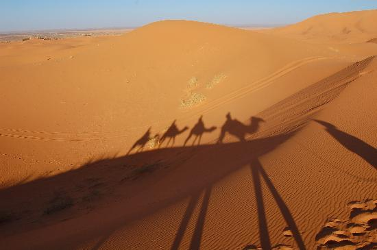 Camel Trekking - Day Tours: Camel train