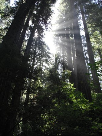 Redwood National Park, Californie : Redwoods