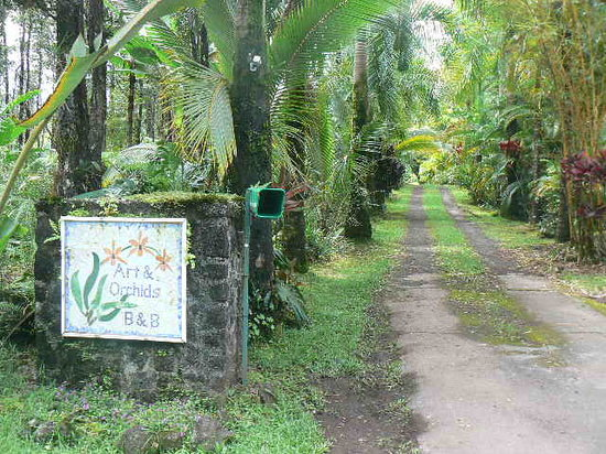 Art and Orchids: The Sign and Driveway