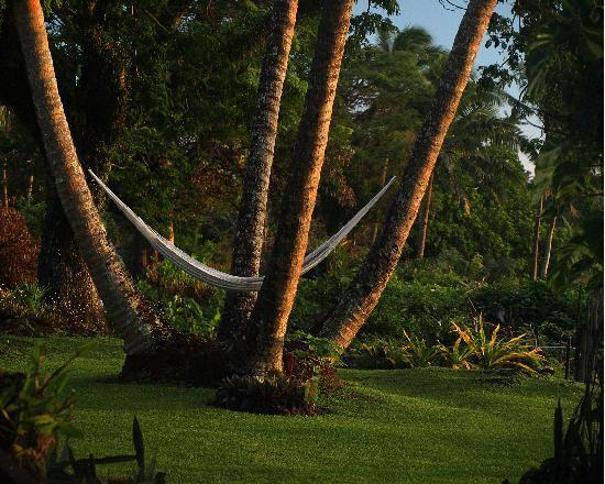Paradise Taveuni: A charming hammock