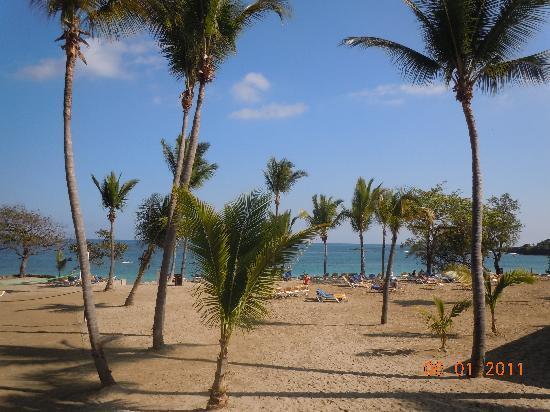 Cofresi Palm Beach & Spa Resort: beach view