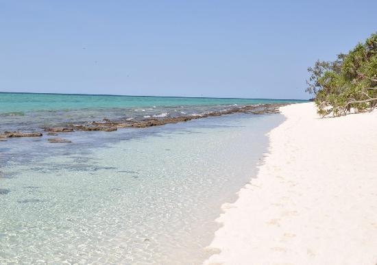Heron Island Resort: A Perfect Heron Beach
