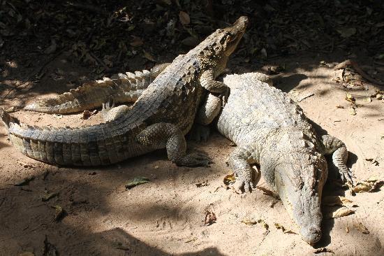 Arch Tours: Cachikaly Crocodile Pool
