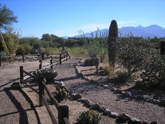 Amado Territory B&B: Small desert garden