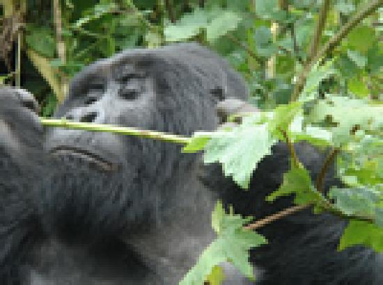 Kilimanjaro National Park, Tanzania: Inspector