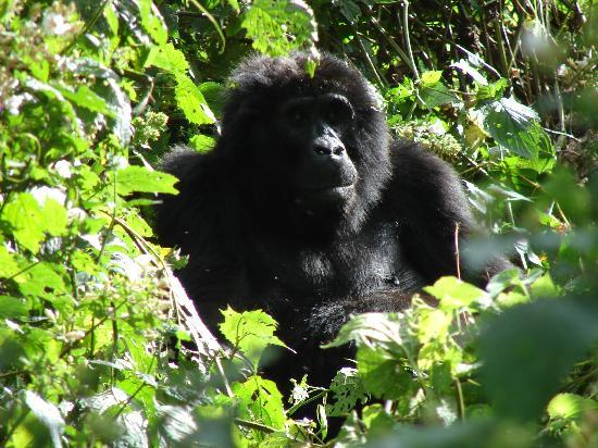 Kilimanjaro National Park, Tanzanya: Big boss