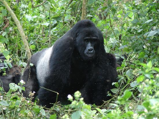 Kilimanjaro National Park, تنزانيا: Big friend