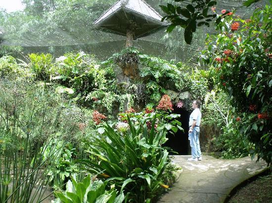 Tabanan, Indonezja: le park aux papillons